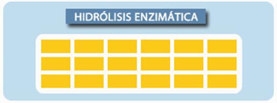 Idrolisi enzimatica