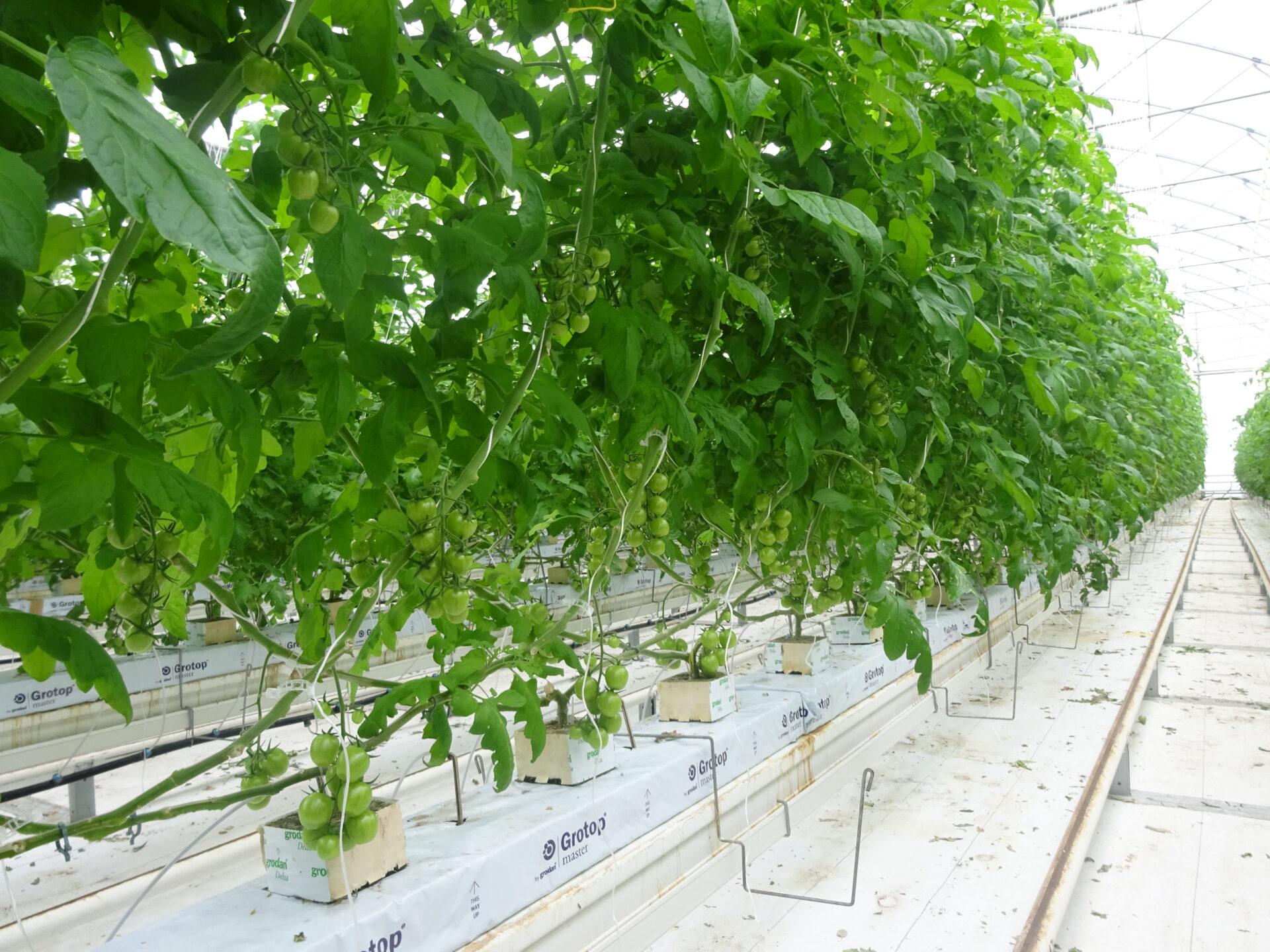 substrato di coltivazione